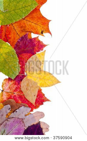 One Side Frame From Pied Autumn Leaves