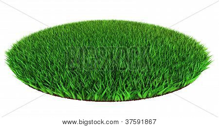 Green Grass Disc Shape