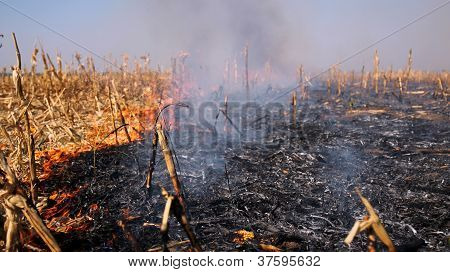 Fire In The Cornfield After Harvest