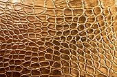 picture of crocodile  - photo of Tint Golden Crocodile Skin Texture closeup - JPG