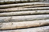 Woodpiles Backgrounds poster