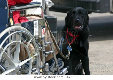 Wheelchair Boarding Bus 2