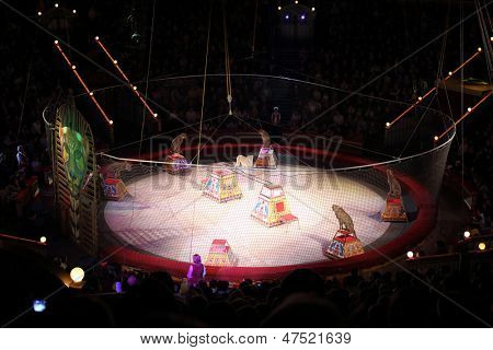 MOSCOW - DEC 31: Leopards on Arena of Great Moscow State Circus on Vernadsky prospekt on Dec 31, 2012 in Moscow, Russia. Capacity of auditorium seats 3310, height of the amphitheater - 36 meters.
