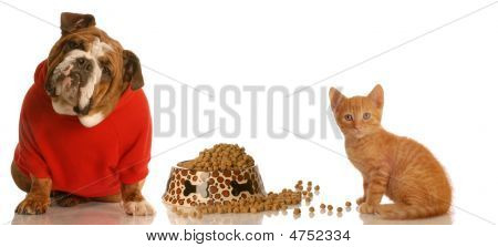 Bulldog In Red Sweater And Kitten Sharing Food