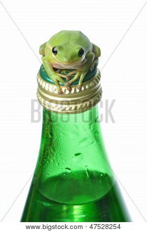 Green Frog On Green Bottle