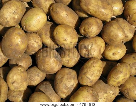 Close Up Of Dirty Cooking Potatoes Outside A Greengrocers.