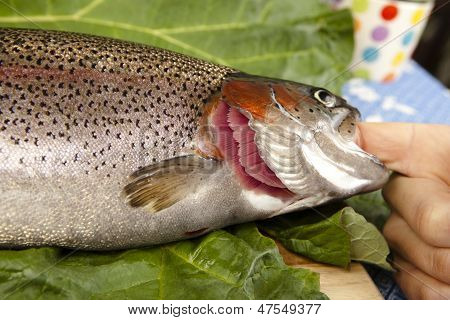 Recognize Fresh Trout