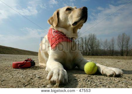 Labrador And Sunshine