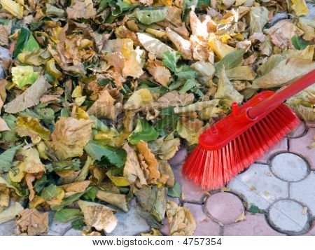 Cleaning Of Fallen Autumn Leaves