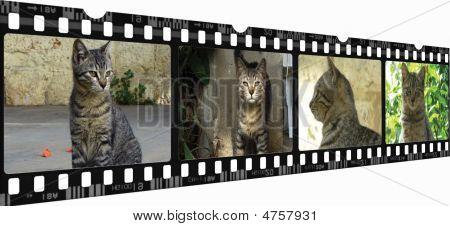 Filmy Cat
