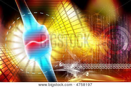 Human Leg Bone Joint