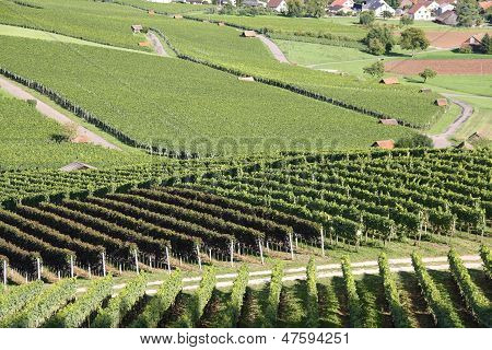 Vineyard and village in summer time