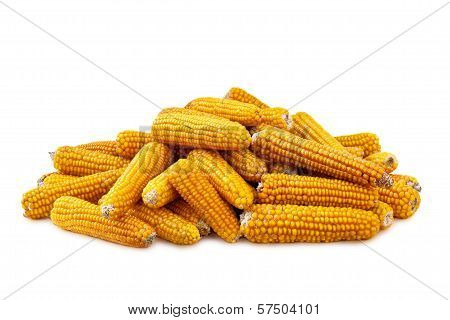 Corn On White Background
