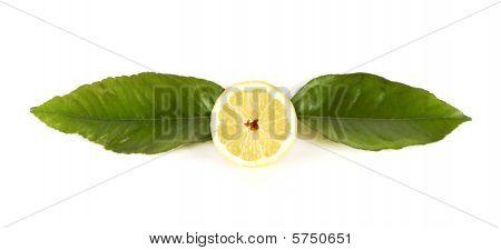 Lemon Forms