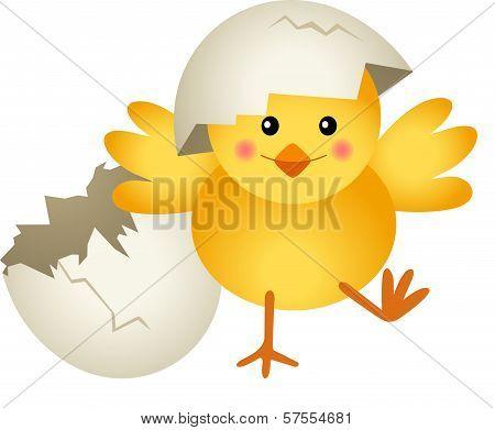 Chick Leaving Cracked Egg