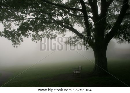 Tree and Bench in Mist