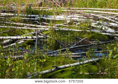 Bog With Blockages