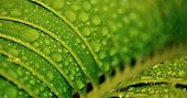 image of raindrops  - Close up of Raindrops on Karoo cycad