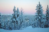 stock photo of laplander  - Forest at beautiful Lapland winter in Sweden - JPG
