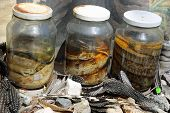 image of curio  - Closeup of Pickled Snakes in Namibia - JPG