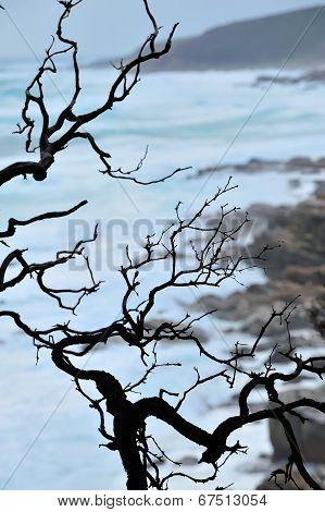 Zen Coastline