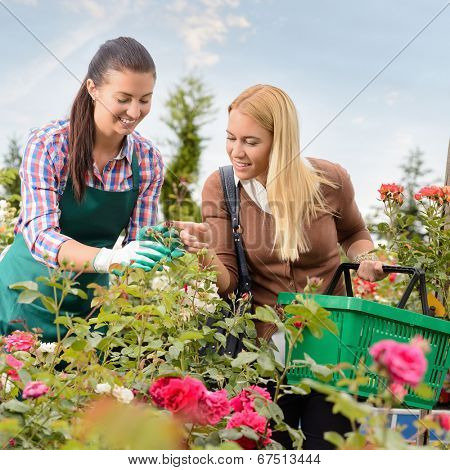 Garden center worker give advice about roses flowers woman customer