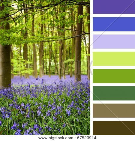 A carpet of bluebells in the woods, Hampshire, UK, in a colour palette with complimentary colour swatches