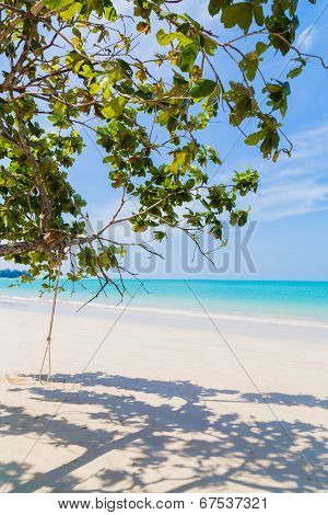 White Sand Beach And Tree