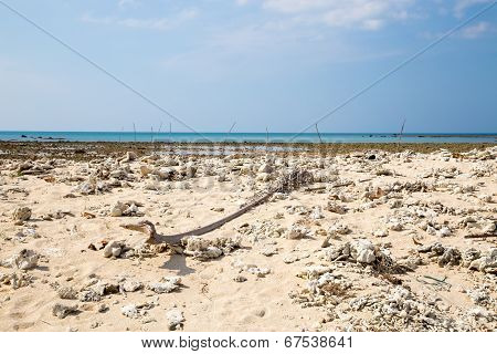 Coral Bleaching On The Sandy Beach