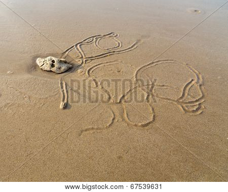Beach Worm Draws Its Track