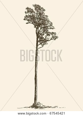 Lonely big tree, Hand drawn Vector illustration