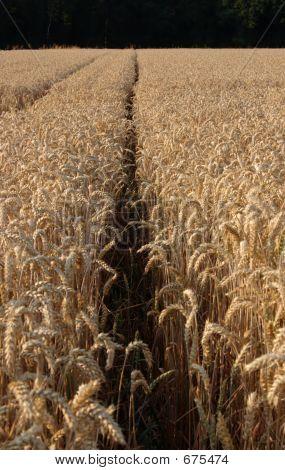 Crop Path