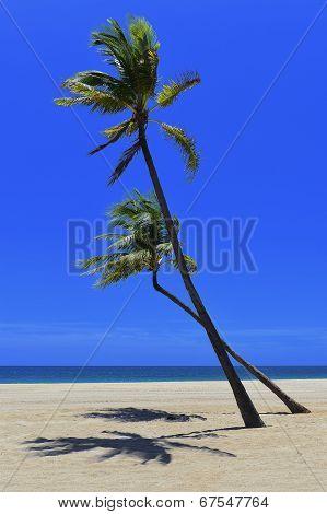Remote Tropical  Beach