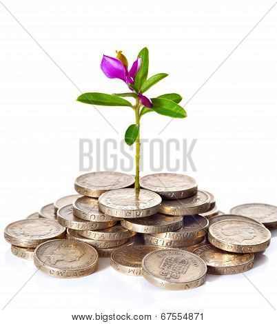Young Sprout With Flower Grows From A Pile Of British Coins.