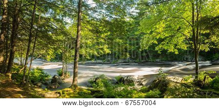 Panorama Of A River In The Forest