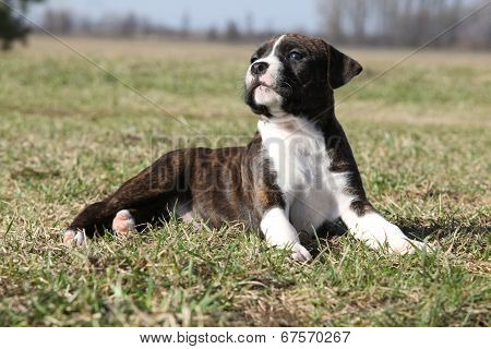 Gorgeous Little Puppy Lying In The Grass