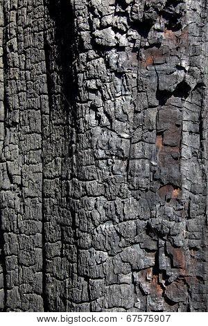 Charred Bark