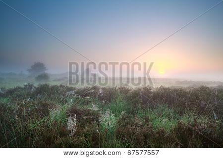 Beautiful Misty Sunrise Over Marsh