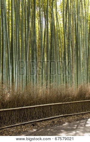 Arashiyama Mountain Kyoto Japan Famous Landmark For Tourist With Bamboo Forest