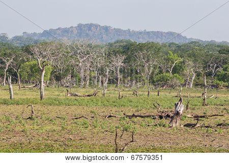 Safai In The Yala Nationalpark