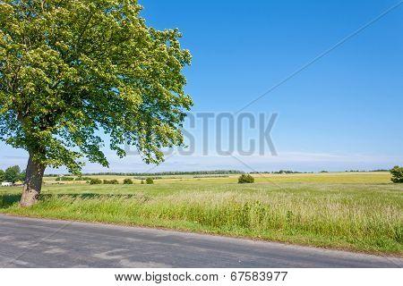 Beautiful Idyllic Landscape