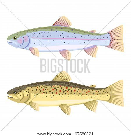 Rainbow Trout And Brown Trout