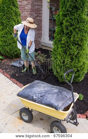 Senior Woman Mulching Around Arborvitaes