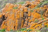 foto of gneiss  - Jointed cliff with orange lichen and clinging vegetation - JPG