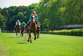 picture of animal nose  - Race horses with jockeys on the home straight - JPG