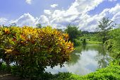 stock photo of crotons  - Bushes of Croton and Pond - JPG
