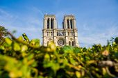 picture of notre dame  - Notre Dame de Paris cathedral in summer day - JPG