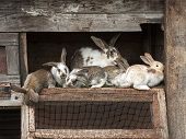 foto of rabbit hutch  - Mother rabbit with newborn bunnies in cage - JPG