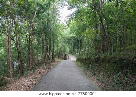 Forest Trail Pathway