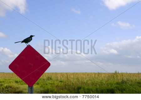 Blackbird standing over traffic red sign
